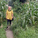 På väg till jobbet genom majsfälten