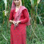 Skördar  majs för hand